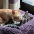 番外編(下)保護猫タビオの真菌バトル、部屋の「除菌」ノウハウ大公開! 先住猫マルオとの引き合わせも