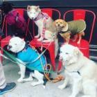 【写真特集】Dogs In NewYork