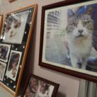 台風で被災した地域猫たちの姿を記録した写真展 「何ができるか、考える機会に」