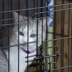 トレーラーハウスでおしゃれに保護猫譲渡会 ネコリパブリック「保護猫のイメージ一新したい」