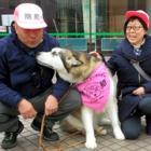 愛犬と散歩しながら街を見守り 「防犯ウォーキング犬」登録したら犬用バンダナもらえます!