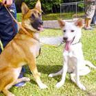 殺処分まぬがれた2匹、災害救助犬に! 玄とモナカが試験を突破 災害時の「出動」めざす