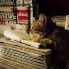 """岩合さんが出会った自由気ままな""""世界中の猫たち"""" フォトエッセー集「世界のねこみち」"""