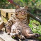 犬や猫、かけがえのない命を丸太に刻み込む 「はしもとみお彫刻の世界展 木のどうぶつたち」