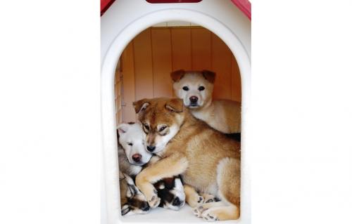 ペットショップの店頭で幼すぎる子犬が販売される一方で、遺棄され、殺処分を待つ子犬たちも存在する
