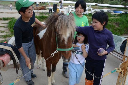 馬にブラシをかけるのも子どもたちだ=鳥取市越路