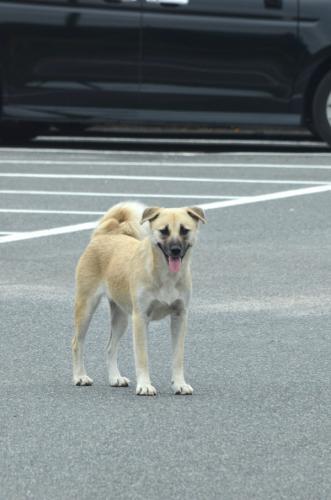 駐車場にいた野犬=山口県周南市