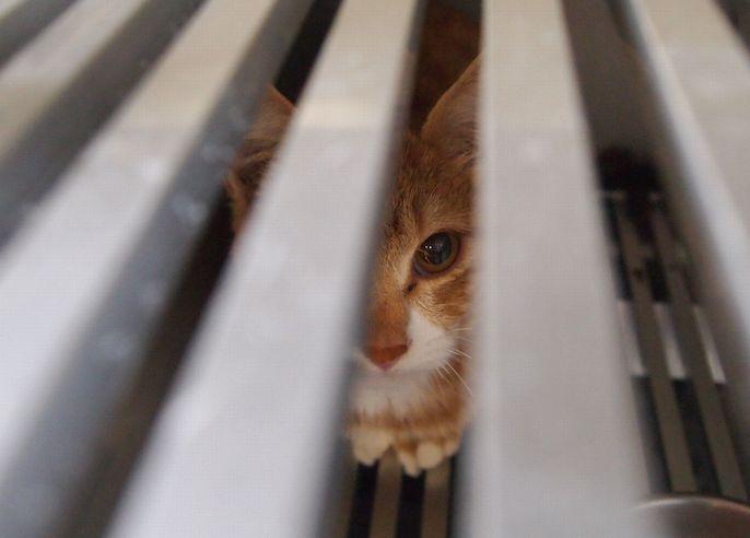 収容室の箱の中で過ごす猫