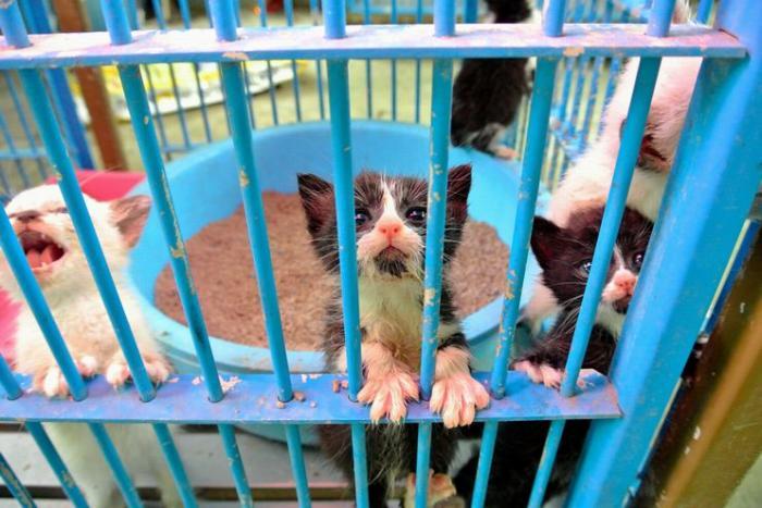 猫の平均寿命は完全屋内飼育であれば15歳を超える。65歳で飼い始めれば、80歳を過ぎるまで面倒を見る覚悟が必要だ=鹿児島県姶良動物管理所