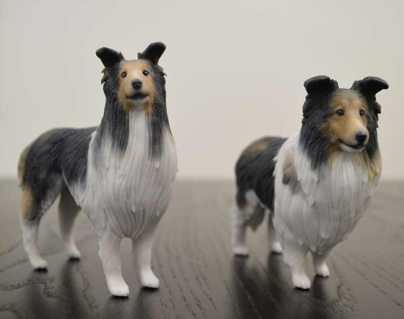 同じ犬種でも個体によって顔立ちも体形もこんなに違う