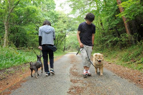犬は左側を歩かせ、飼い主が1歩前へ。他の犬とすれ違う時は飼い主が壁になる。