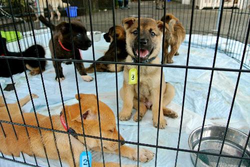 熊本県動物管理センターに収容された子犬たち。行き先が決まった犬も=3日、熊本市東区