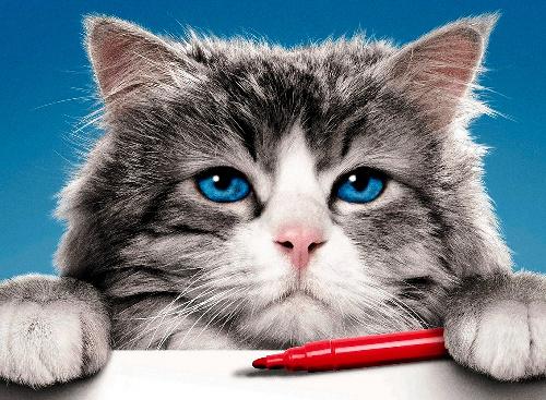 仕事一筋の中年男性が猫と入れ替わってしまった映画「メン・イン・キャット」©2016 - EUROPACORP - All rights reserved