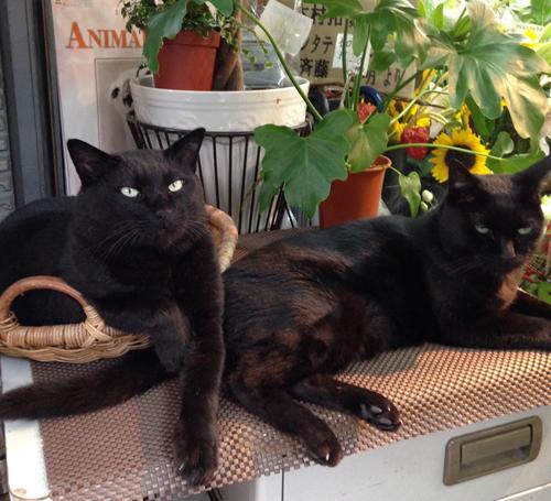 看板猫として愛されたユニ(左)とヒロシ