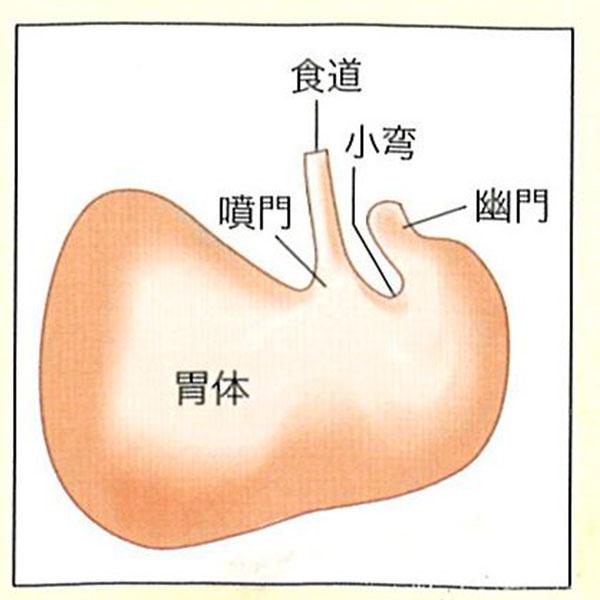 うさぎの胃