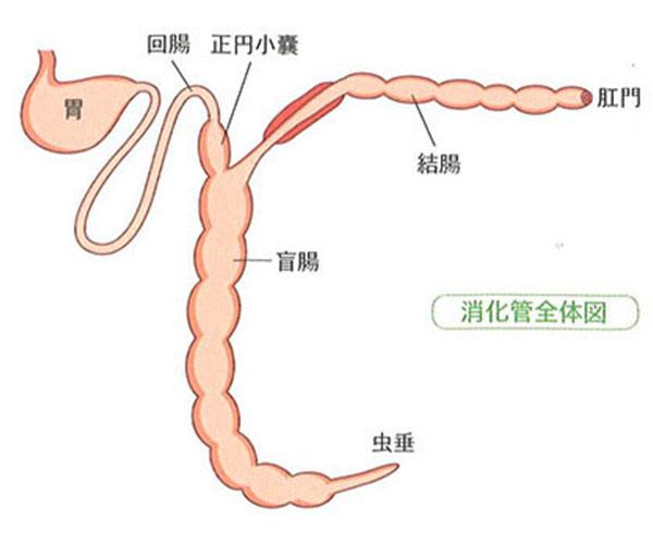 胃腸全体図