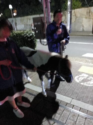 国学院大学前の道で、捕獲されてペットショップに連れ戻される小馬=15日午後、東京都渋谷区、黒沢健人さん提供
