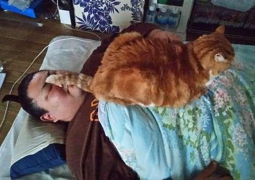 稽古後に昼寝する福轟力とムギ。ムギはなぜか、いつも顔の上に尻尾を乗せる=福轟力提供