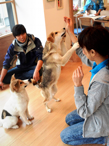 世田谷譲渡センターのリビングスペースで飼い主との出会いを待つ犬=東京都世田谷区桜丘