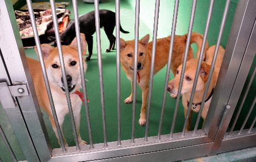 茨城県動物指導センターに収容された犬たち。譲渡されることが決まったという=笠間市日沢