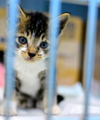 新しい飼い主を探している子猫=名古屋市千種区の市動物愛護センター