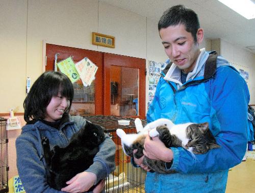 天売猫の「ひじき」(左)と「チロル」。天売島の冬の厳しい環境下で暮らしてきたためか、どちらもしっぽが短い=北海道旭川市の旭山動物園