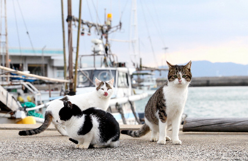 「猫の島」と呼ばれる藍島。港を歩くと、どこからともなく猫が近寄ってきた=福岡県北九州市小倉北区
