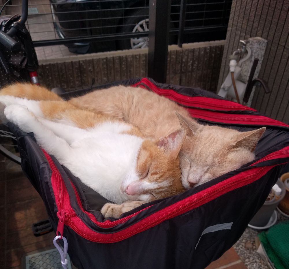 お母さんの自転車のカゴで仲良く眠るおちびときなこ
