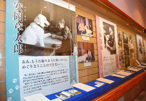 作家と飼い犬や飼い猫の写真が展示されている=高知県立文学館