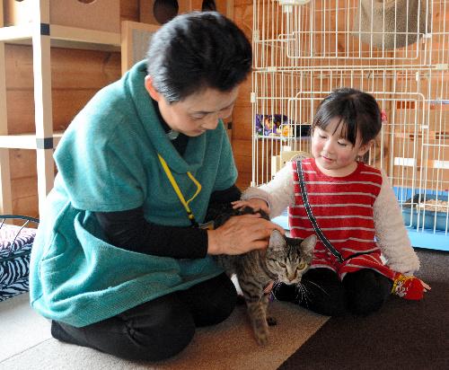 「ねこのいえ」で猫と遊ぶ客=三重県玉城町