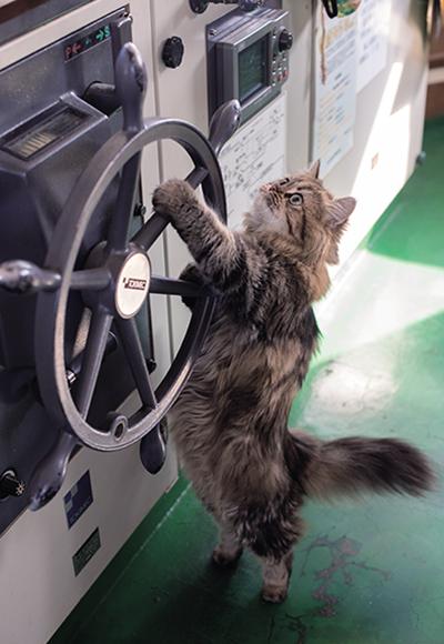 停泊中に舵をにぎるカンパチ