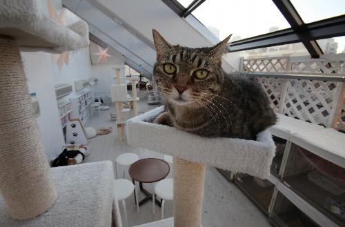 「東京キャットガーディアン」のカフェスペースでは、保護猫たちが自由にくつろいでいる=東京都豊島区