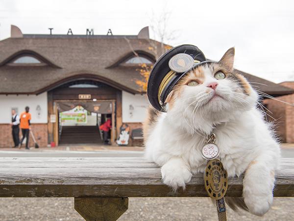 ネコをかたどった貴志駅前にたたずむたま2世駅長、通称ニタマ