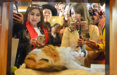 ニタマの写真を撮るインドネシアの一行と本谷紗己さん(右)=和歌山県紀の川市貴志川町神戸