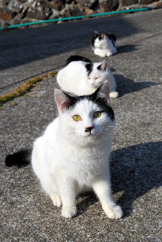 熊本県上天草市大矢野町湯島の猫たち=2014年1月