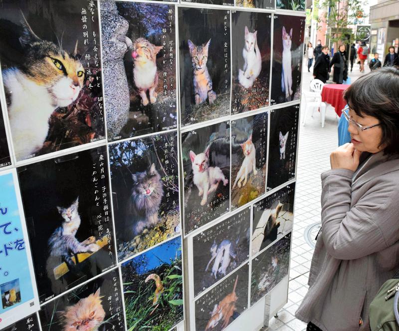 捨て猫の写真のパネル展もあった=仙台市青葉区