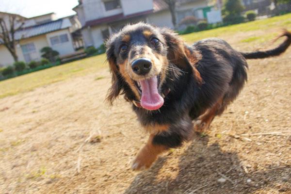 学校や職場でも、いつでも愛犬と一緒にいられたら……