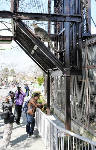 来園者の頭上にせり出す形で2階部分を設けたユキヒョウ舎=名古屋市千種区の東山動物園