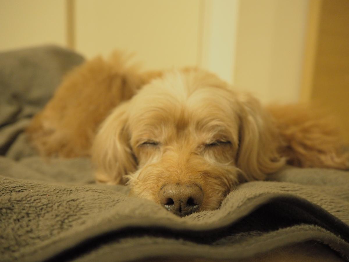 そっと寄り添いこの寝顔。まるで天使!