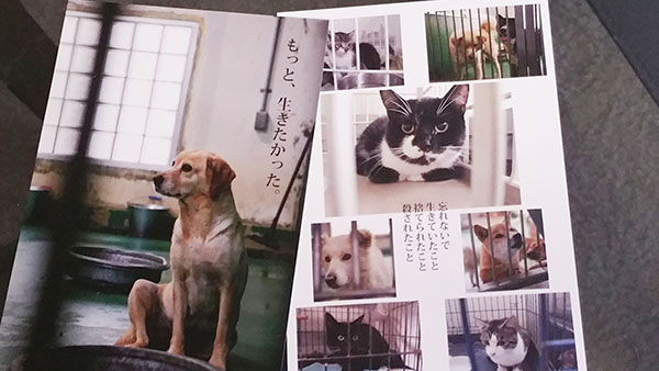 水戸で動物愛護活動をされている飯塚みどりさんが作ったポストカード。殺処分が決まった犬や猫たちの写真です。