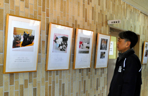 保護された猫たちの写真が並ぶ展示会場=兵庫県洲本市宇原の市民交流センター
