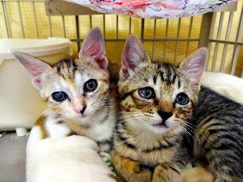 保護された子猫の写真=淡路ワンニャンクラブ提供