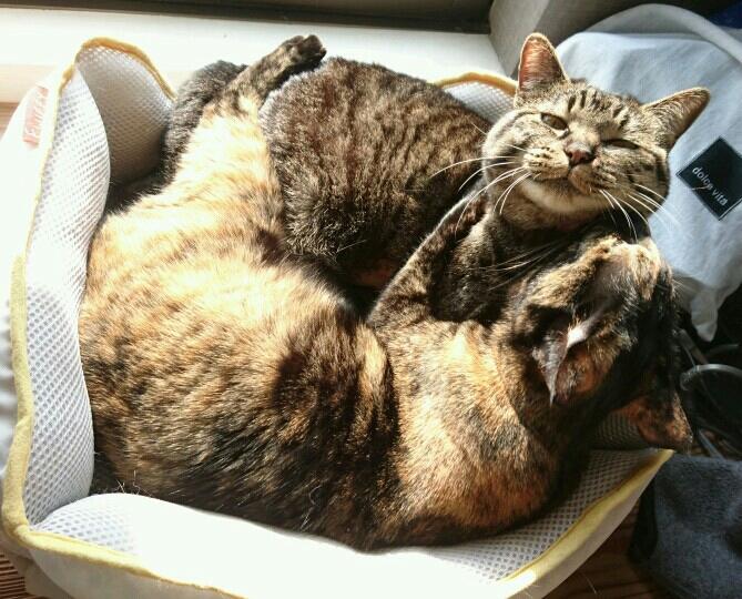 ビビり猫(上)と好奇心猫。仲良く日なたぼっこ。