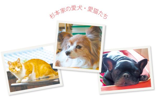 左:20年も飼っていたというモモタロウは夫妻のかすがい的存在だった 中:京都の家で老後を過ごしている小梅は17歳 右:飄々としたキナコも元保護犬だ