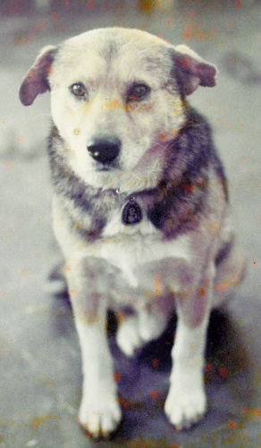 生前のタローの写真(撮影時期、場所は不明)。石岡市立東小学校に飾ってある